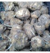 Луковицы